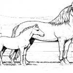 Pferde 33