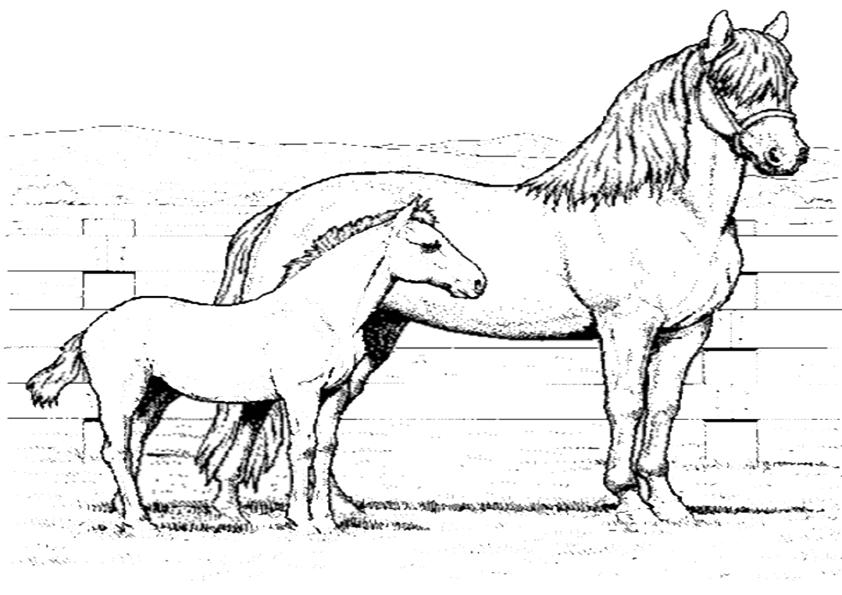 Pferde-33