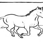 pferde-35