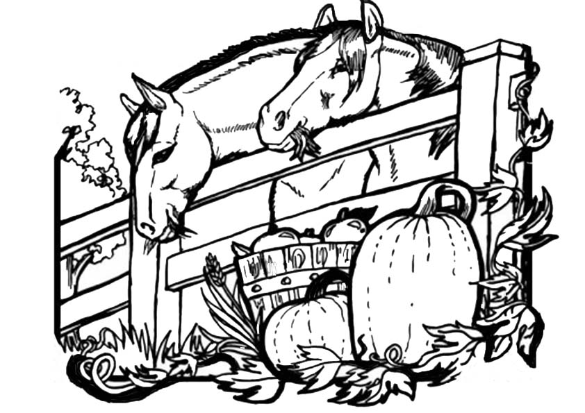pferde-15