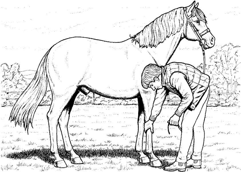 pferde-27