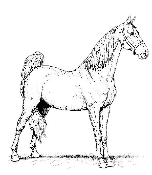 Atemberaubend Pferde Malvorlagen Für ältere Kinder Ideen ...
