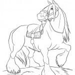 Pferde-51