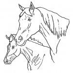 Pferde-44