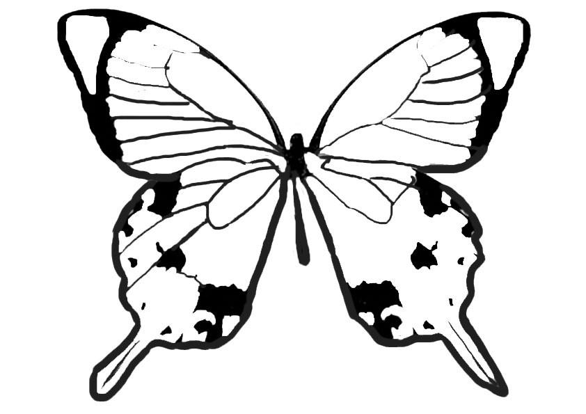 Ausmalbilder Schmetterling 10