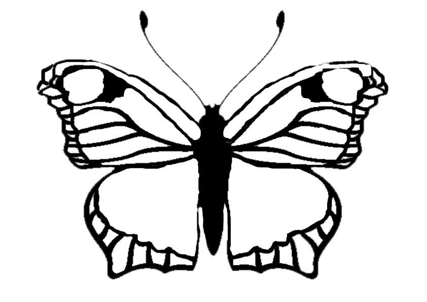 Ausmalbilder Schmetterling 7