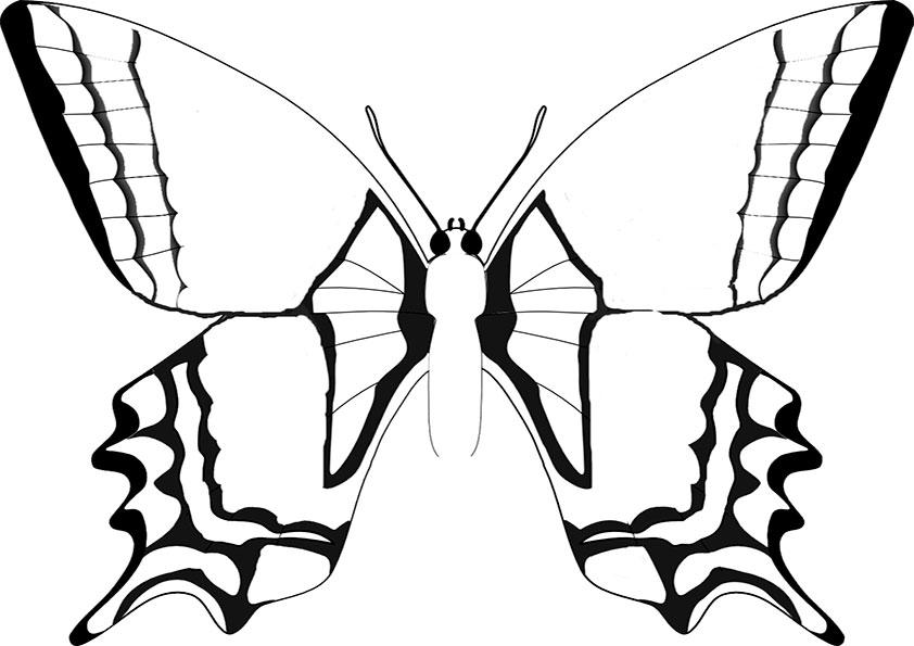 Ausmalbilder Schmetterling 9