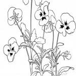 Blumen-20
