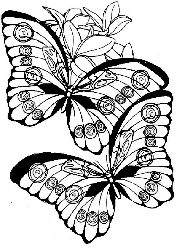 Ausmalbilder Schmetterling-16
