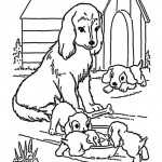 Hunde-14