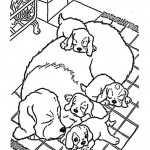 Hunde-24