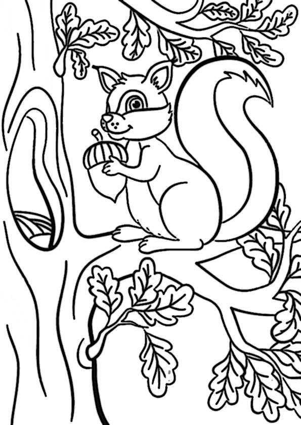eichhörnchen10  ausmalbilder malvorlagen