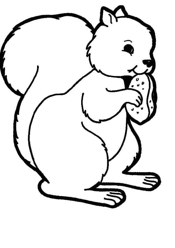 ausmalbilder eichhörnchen-13